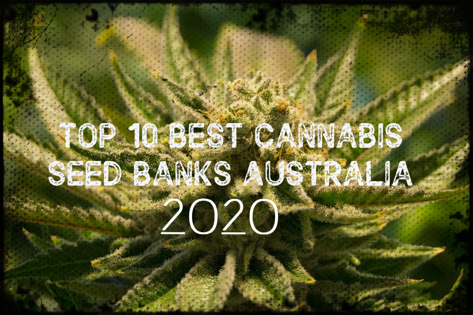 Top 10 Best Cannabis Seed Banks Australia 2020