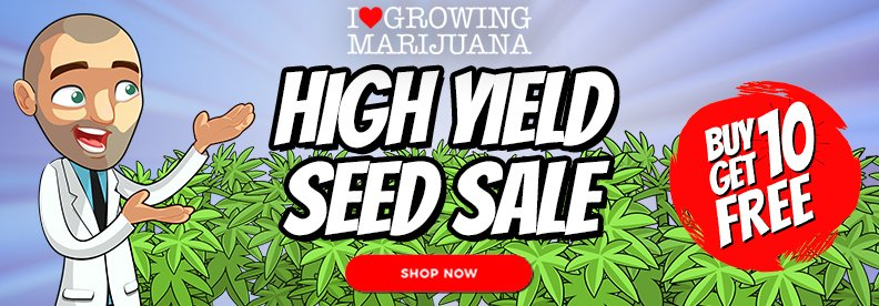 Weed Seeds Australia High Yield Sale